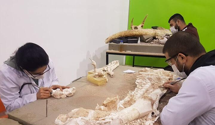 Kayseri'de 3 yılda bine yakın fosil bulundu.