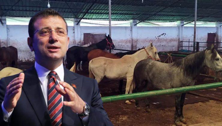Hatay'a gönderilen 50 at kayıp!…