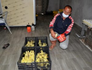 Hollanda'da turizm işini bırakıp Muş'ta kaz yetiştiriciliğine başladı..