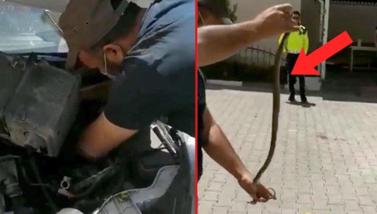 Otomobilin motoruna giren yılanı çıplak elle çıkardılar