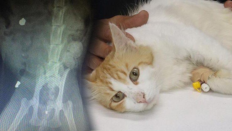 Akılalmaz olay! Civcivleri yediği iddia edilen kedi tüfekle vuruldu…